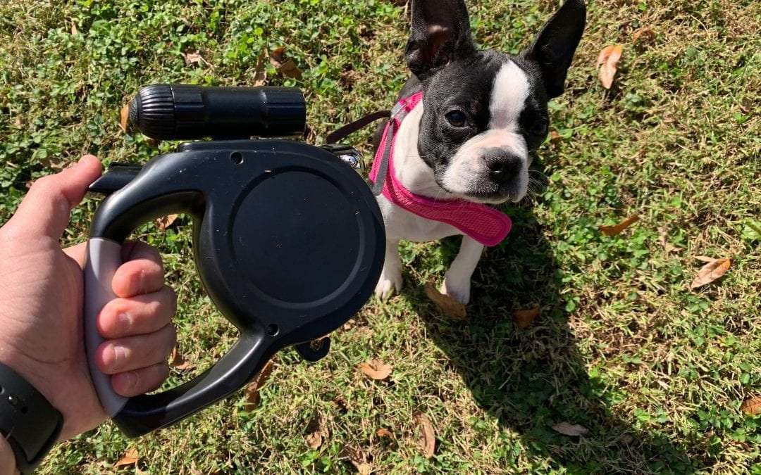 Mease Dr Prepare Retractable Dog Leash REVIEW Walk your dog in style